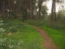 יער צלפון 018