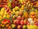 פירות ארגון מגדלי הפירות
