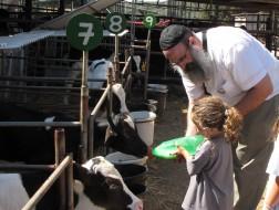 פסח ברפת שביל פרות החלב