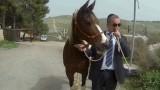 איתן אקשטיין רטורנו סוס