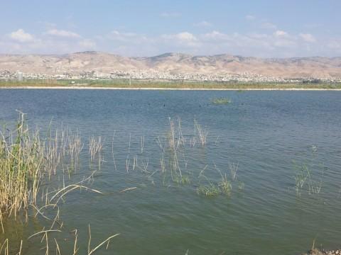 אגם צפרים מים