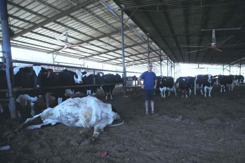 הרפתן יוראי זולר ברפת בבאר טוביה- 11 פרות מתו מהפגיעה