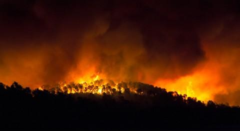 שריפהforestal de noche