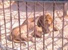 גן החיות עזה