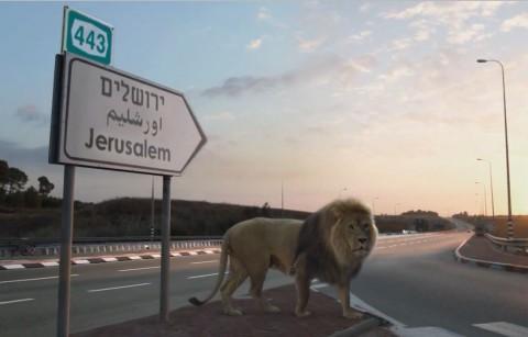 אריה, ירושלים