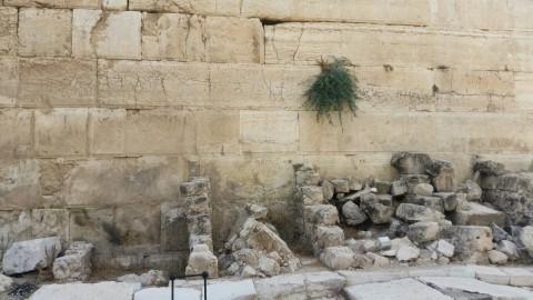 הכותל ירושלים