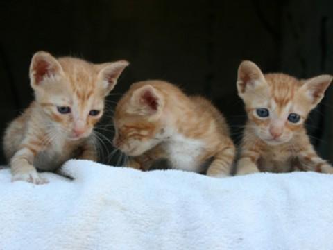 חתול אייל נחמיאס