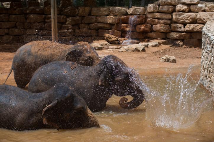 חיות פיל