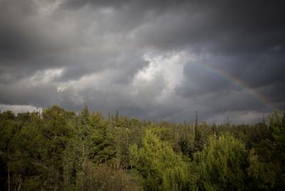 מזג אויר נוף עצים שמים