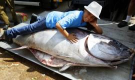 דג טונה