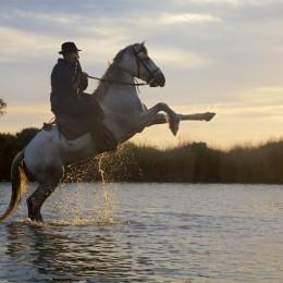 סוס לבן