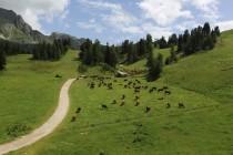 האלפים הצרפתיים, נוף