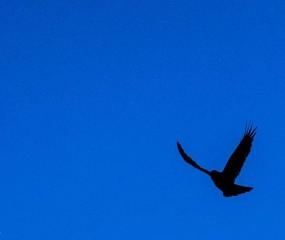 לעוף ציפור