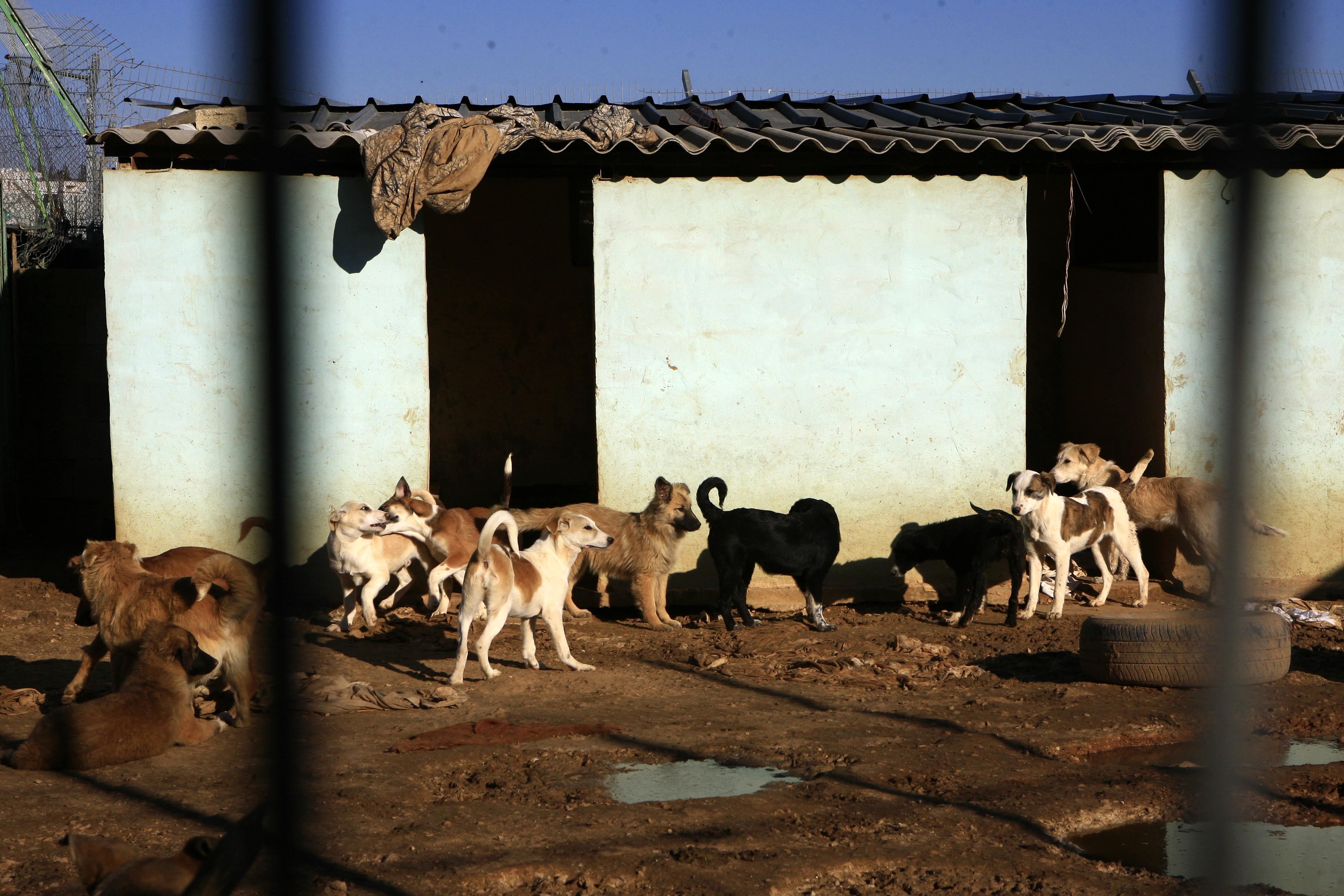 """קול חי: תחקיר """"קול חי"""": עיריית רמת גן הקימה כלביה בסמוך לבית כנסת"""