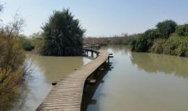 גשר אפק_800x450