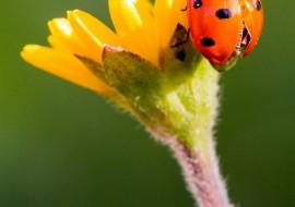 התחדשות, פרח, חיפושית