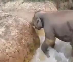 פיל חיה