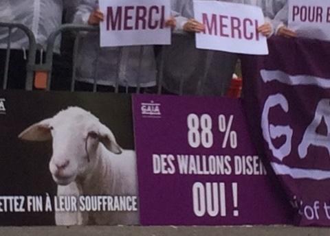 """ארגוני """"צער בעלי חיים"""" בבלגיה לאחר ההצבעה, מודים מחוץ לפרלמנט"""