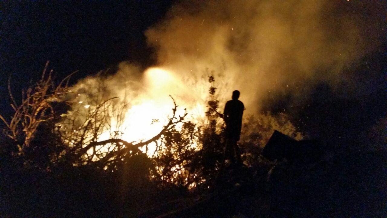 שריפה לילה יער