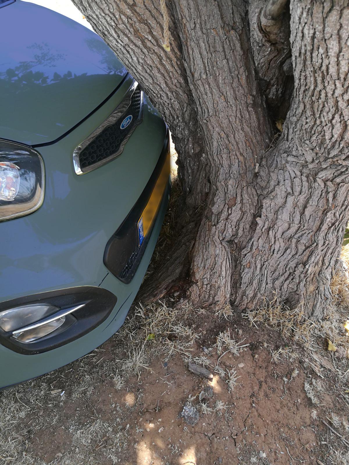 רכב עץ ויעל