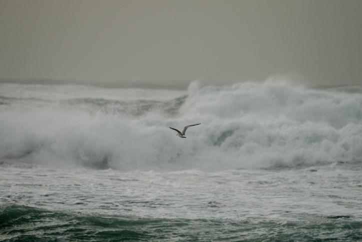 חוף סוער