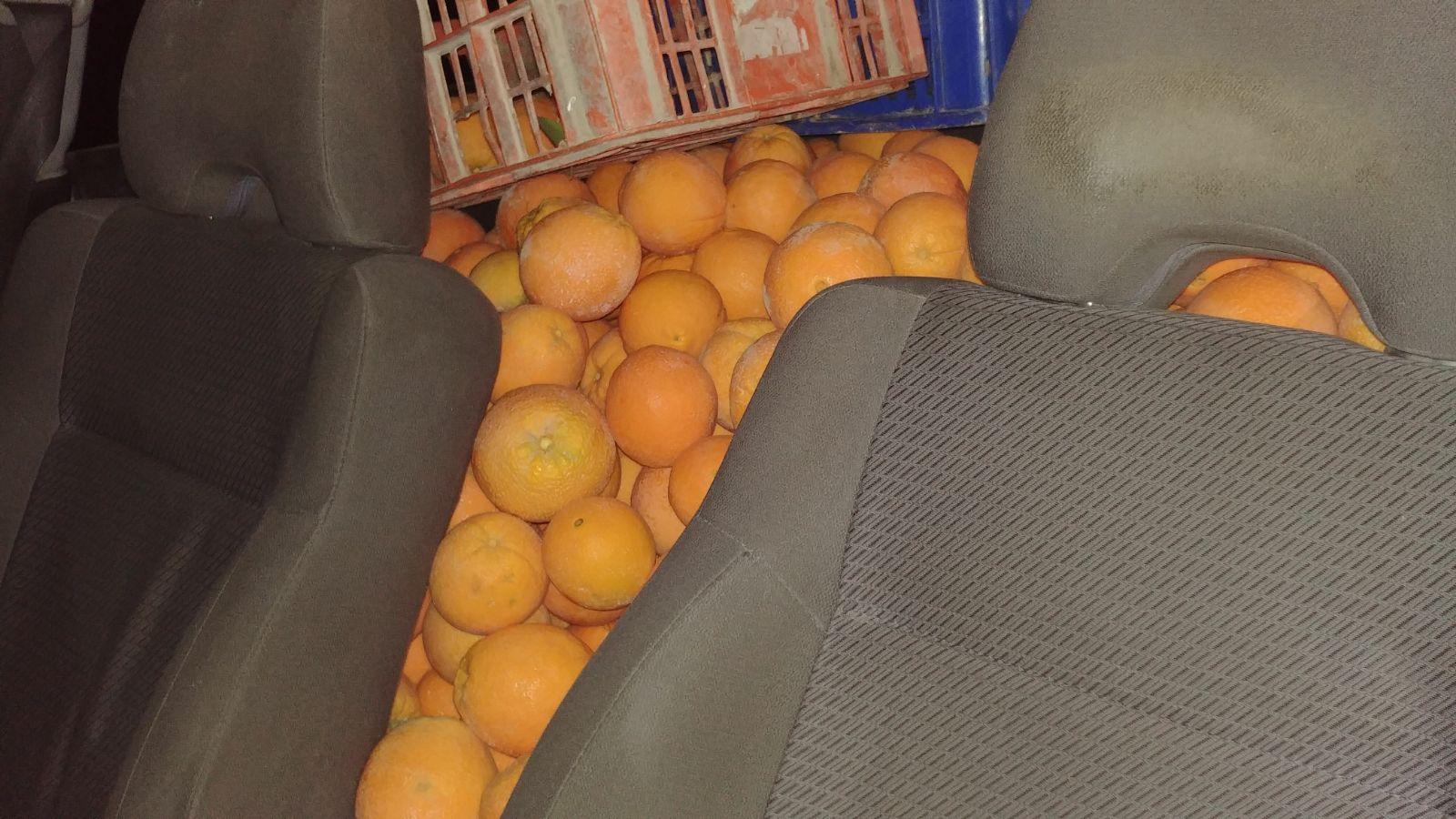 תפוזים גנובים