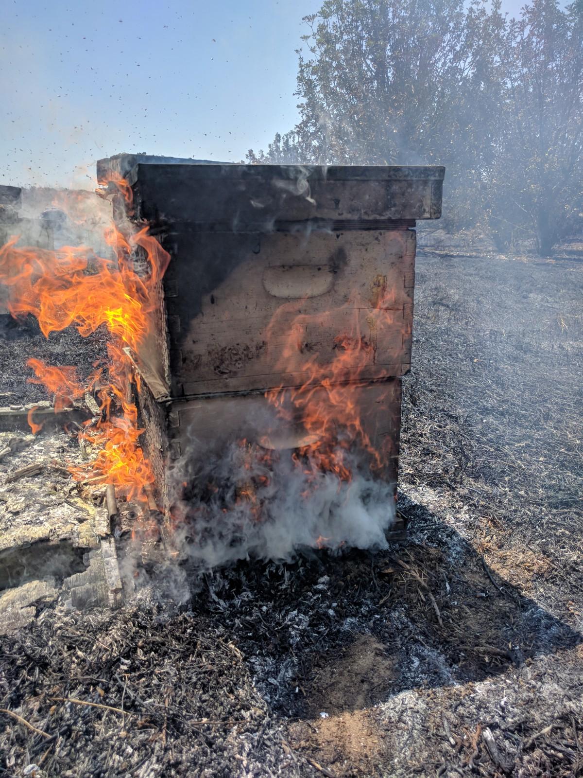 כוורת נשרפת בעוטף עזה