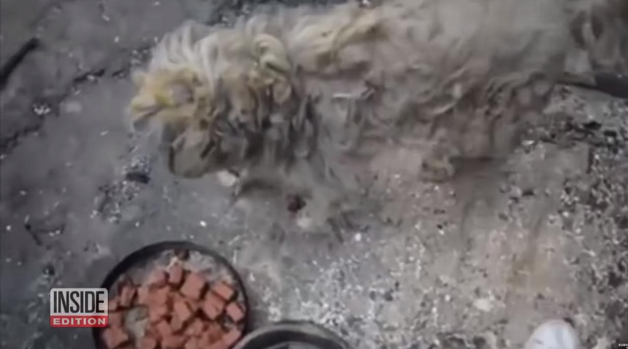 הכלב לאחר יציאתו מהתנור שהגן עליו