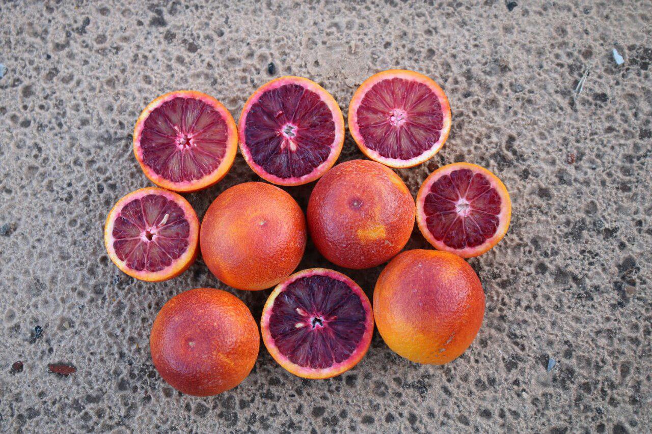 תפוז המורו