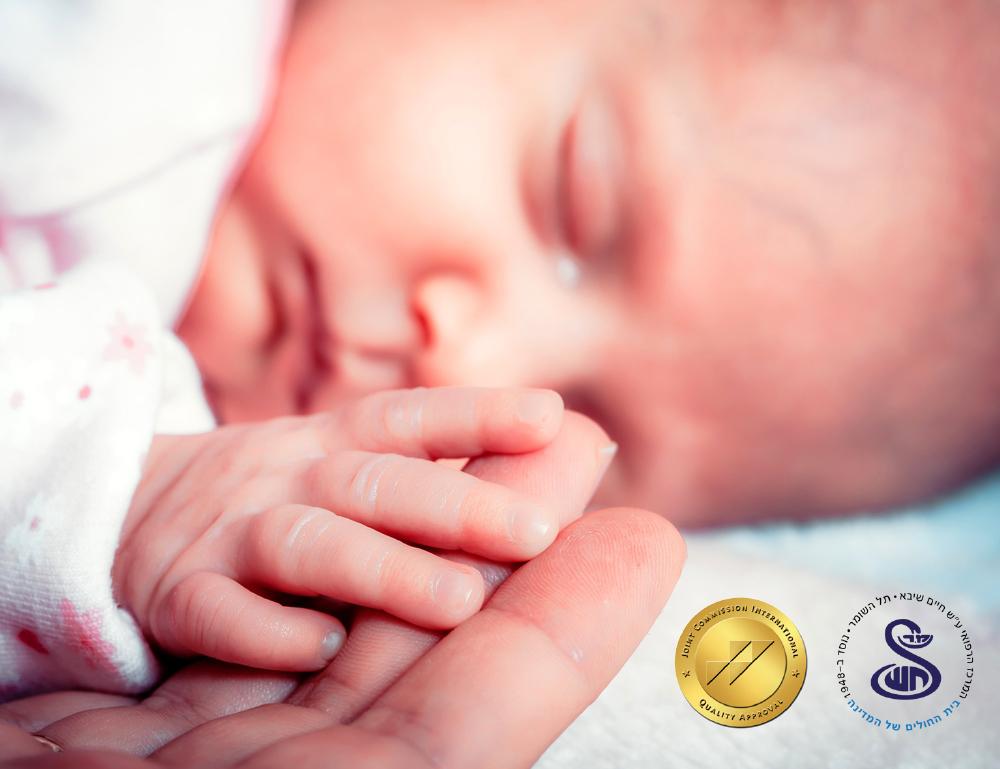 shiba_newborn_yahatz