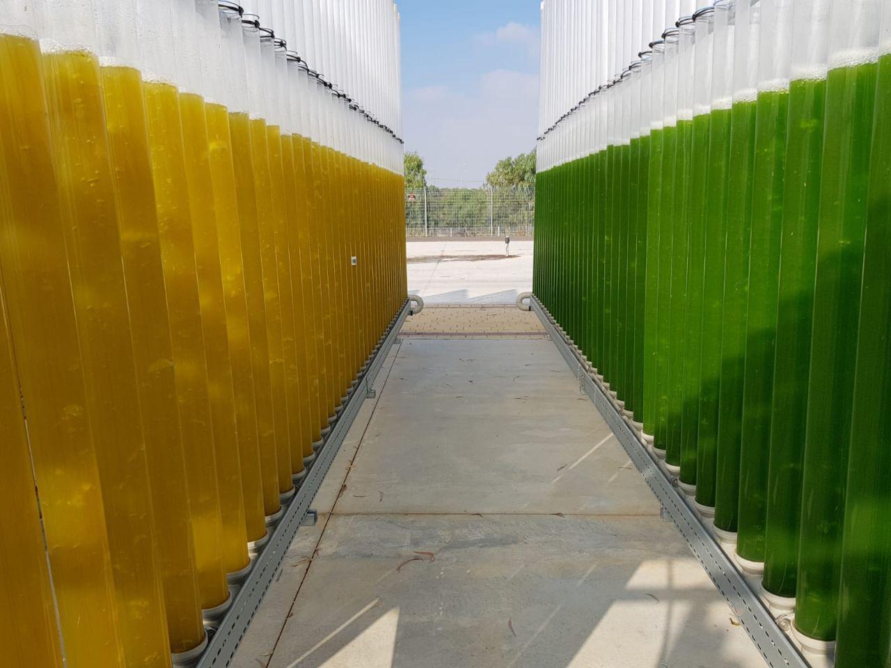 מיכלים לגידול אצות