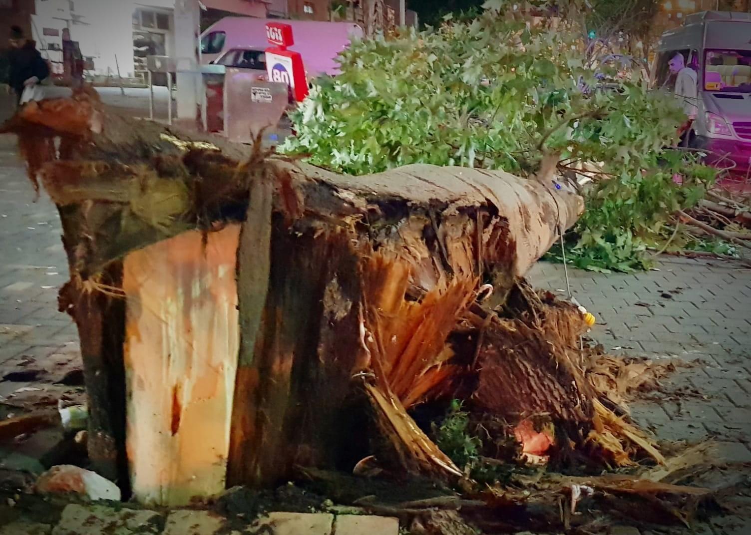 קריסת עץ בני ברק דוד קליגר