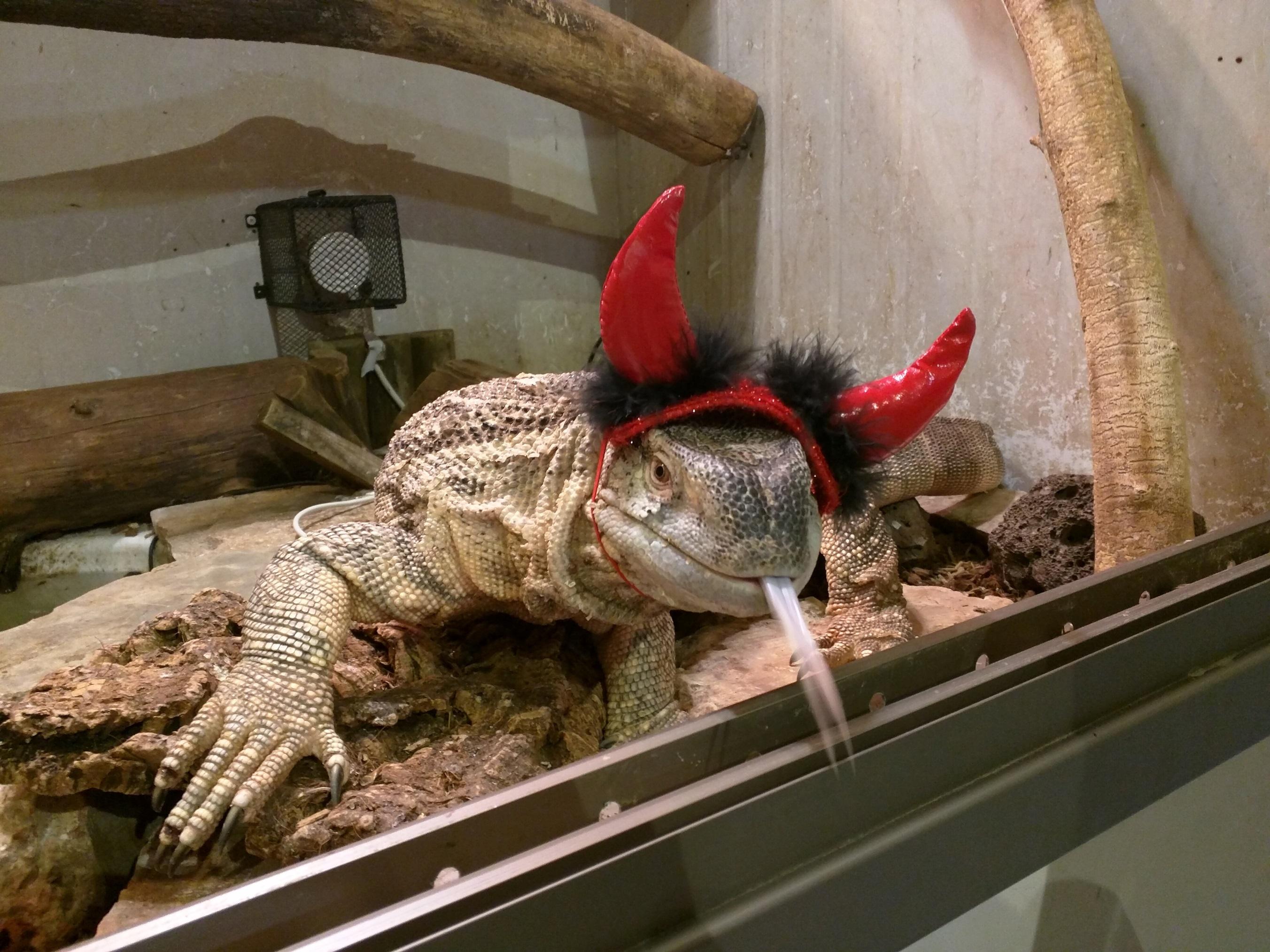 פורים במוזיאון הטבע התנכי -