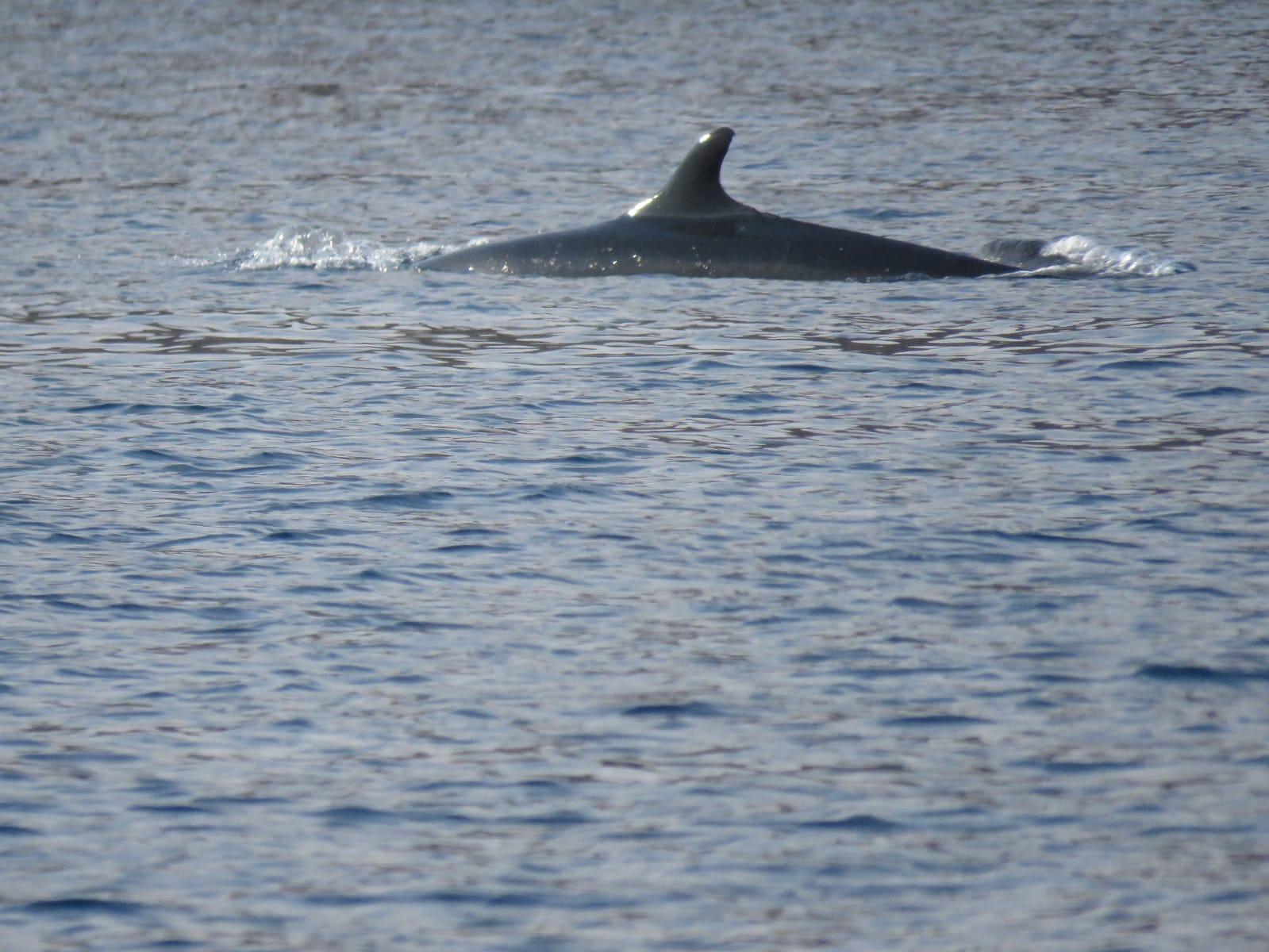 דולפין בחוץ