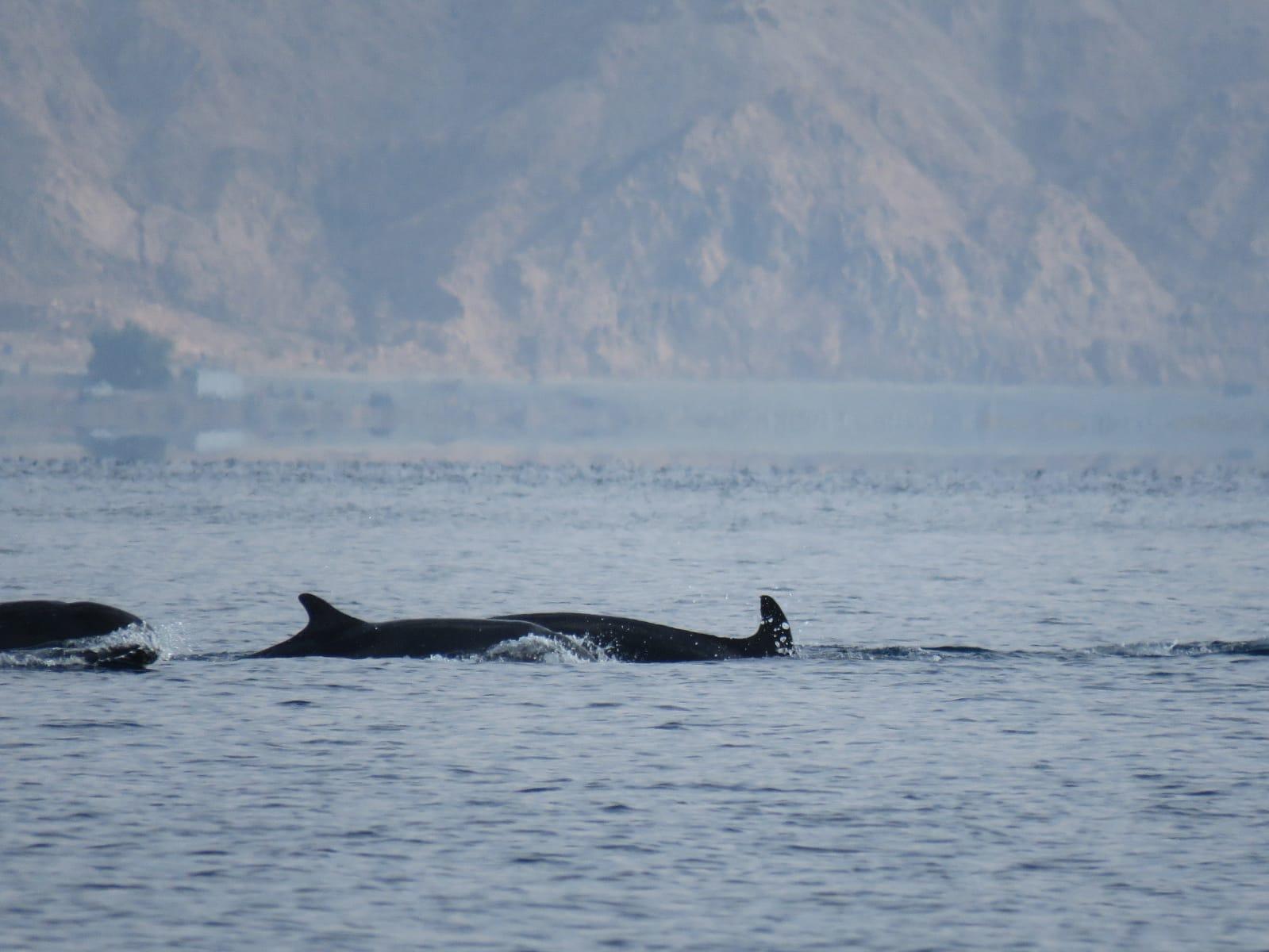 3 דולפינים
